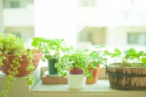 植物_min