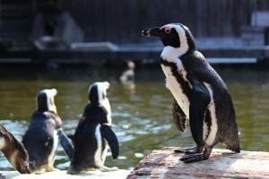 ペンギン_min